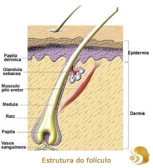 El complejo de 7 aceites de la caída de los cabello